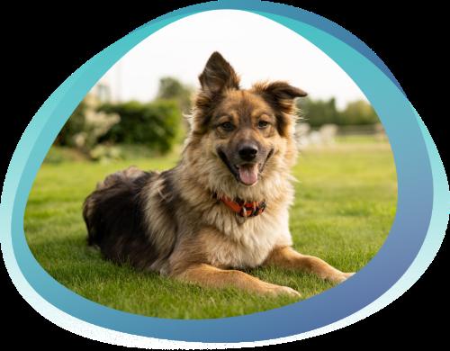 Кушинг синдром у собак: диагностика и методы лечения болезни