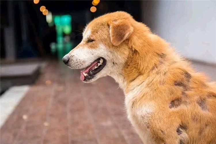 у собаки выпадает шерсть местами фото