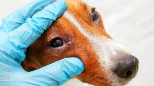 выделения из глаз у собаки