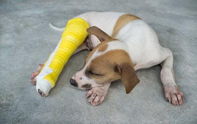 проблемы с костной системой у собаки