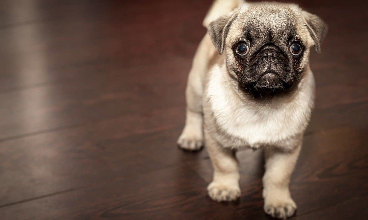 болезни у собак маленьких пород