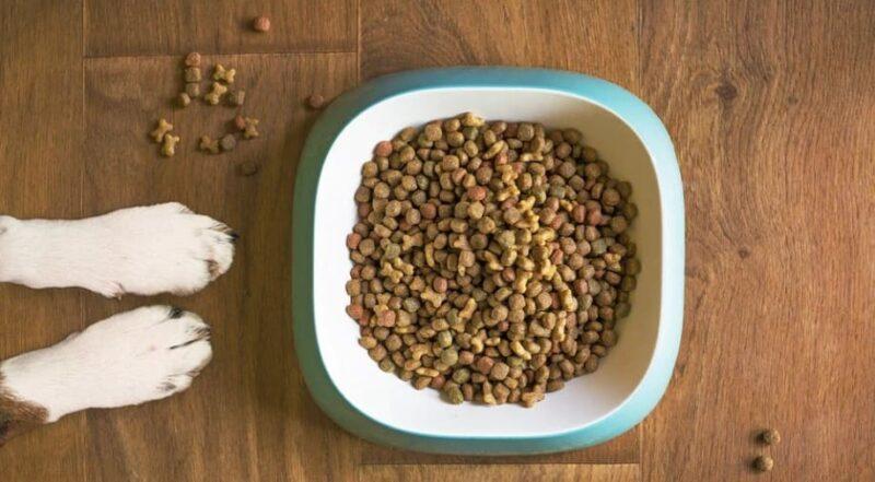 питание собак с синдромом Кушинга